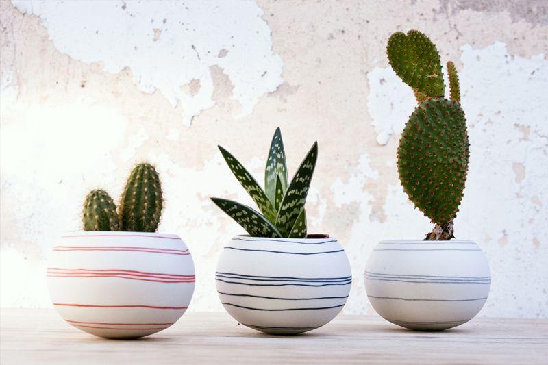 Mini cactus em vasos bonitos para decoração de locais fechados.