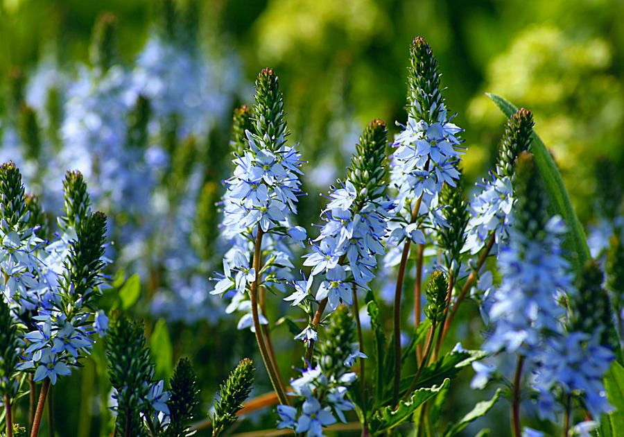 Spring Meadow Wallpaper By Vdragosphotography On Deviantart Wonderful Flowers Amazing Flowers Meadow