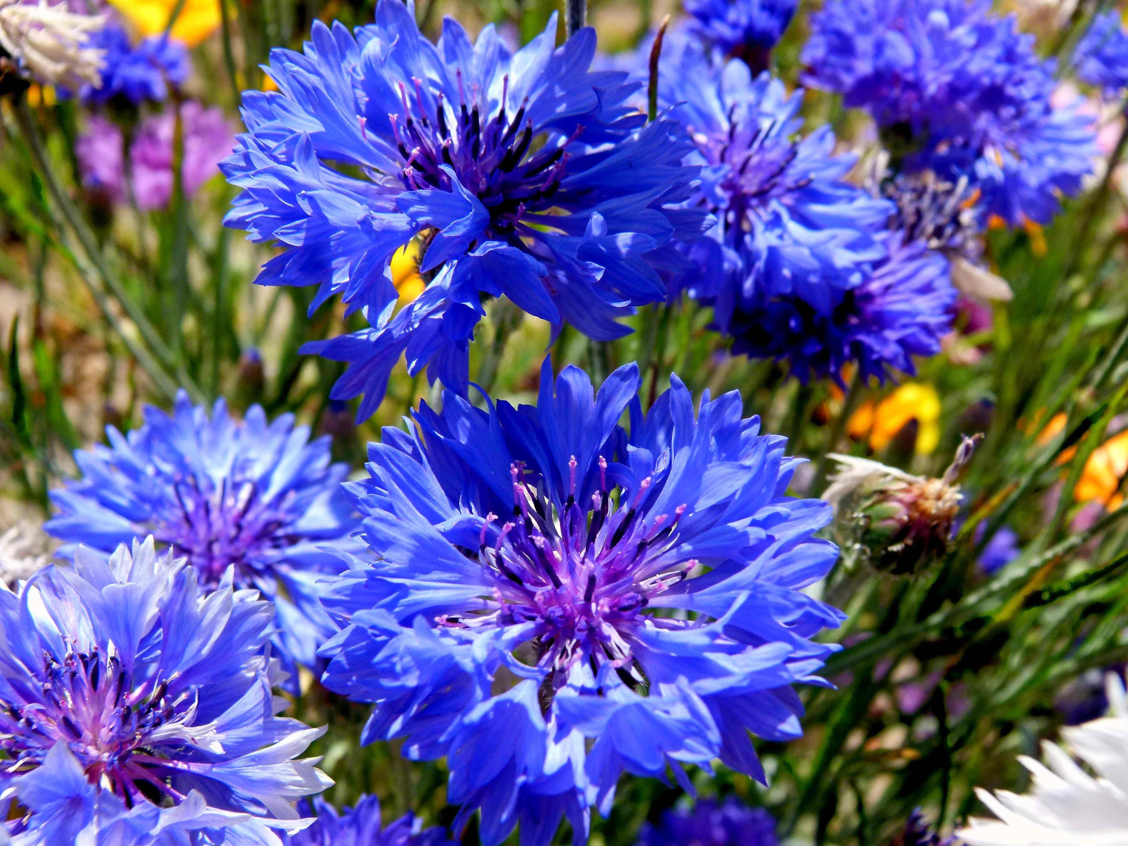 Pohozhee Izobrazhenie Easy Plants To Grow Flower Seeds Most Beautiful Gardens