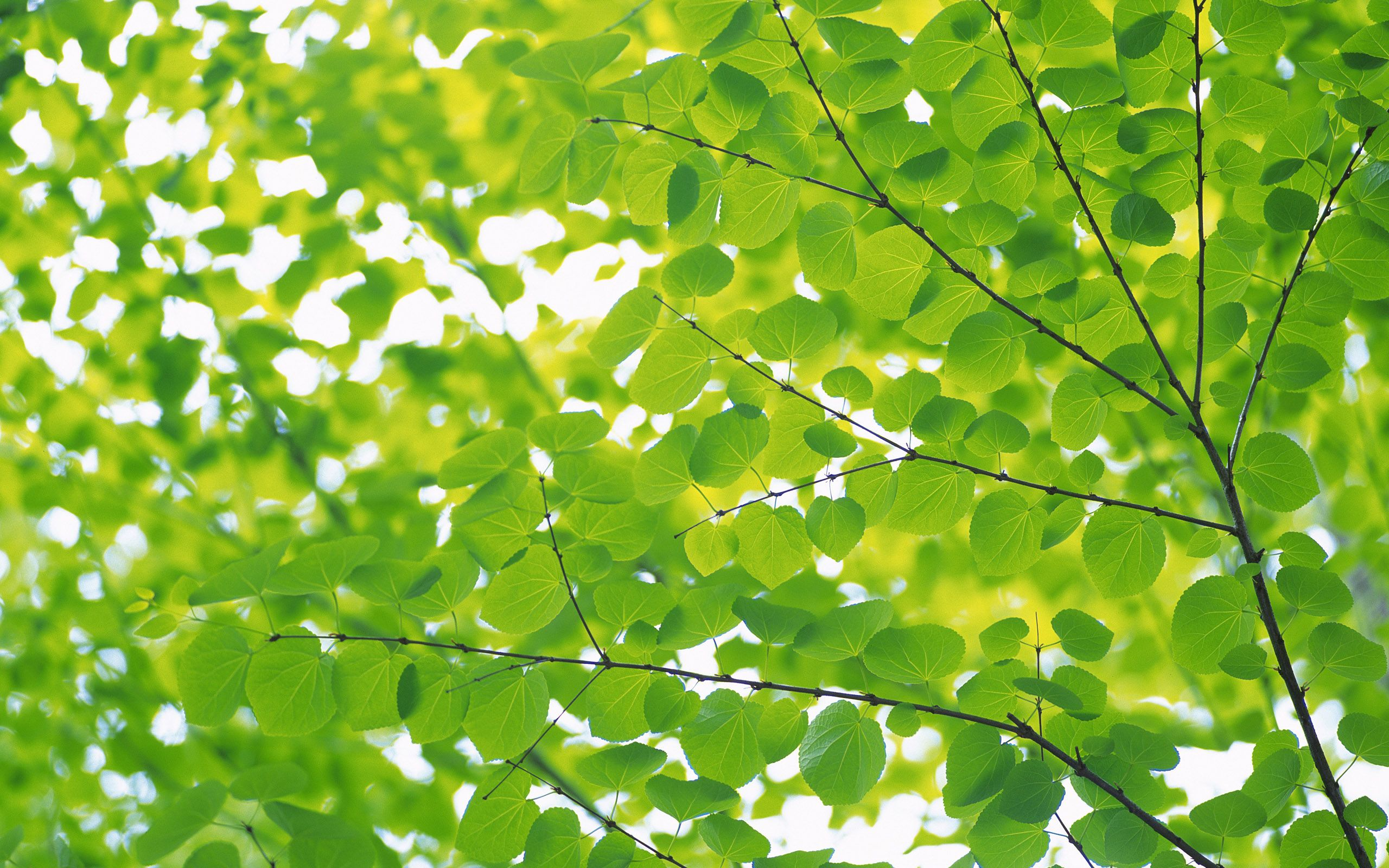 Green Tree Green Nature Nature Leaves