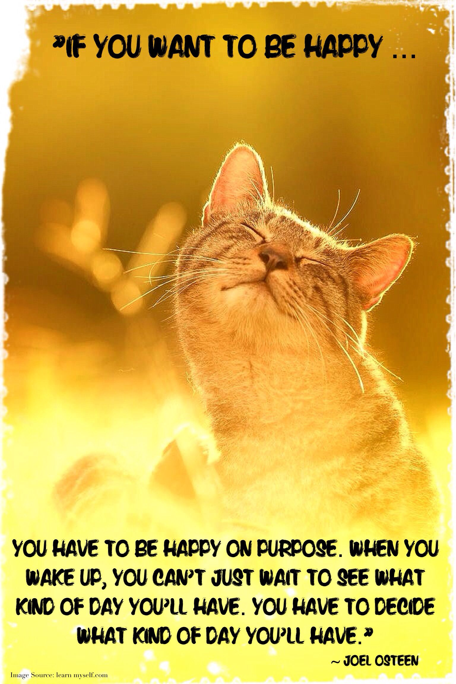 Happiness Quote  How To Feel Happy  How To Be Happy  Cute Cat