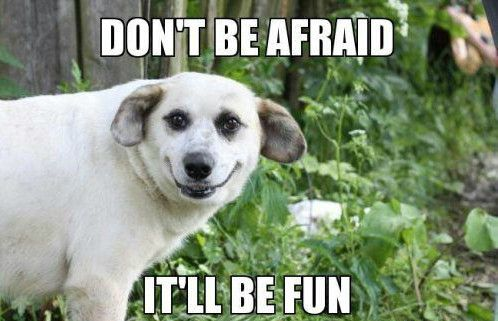 Fun Dog Meme : Funny dog memes funny dog memes related posts funny dog pictures
