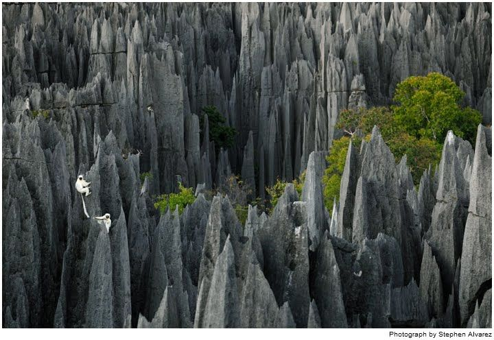 Stone Forest of Madagascar (check out the monkeys!)