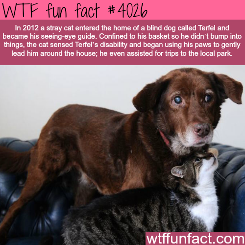 Wtf Facts Funny Interesting Amp Weird Facts Pets