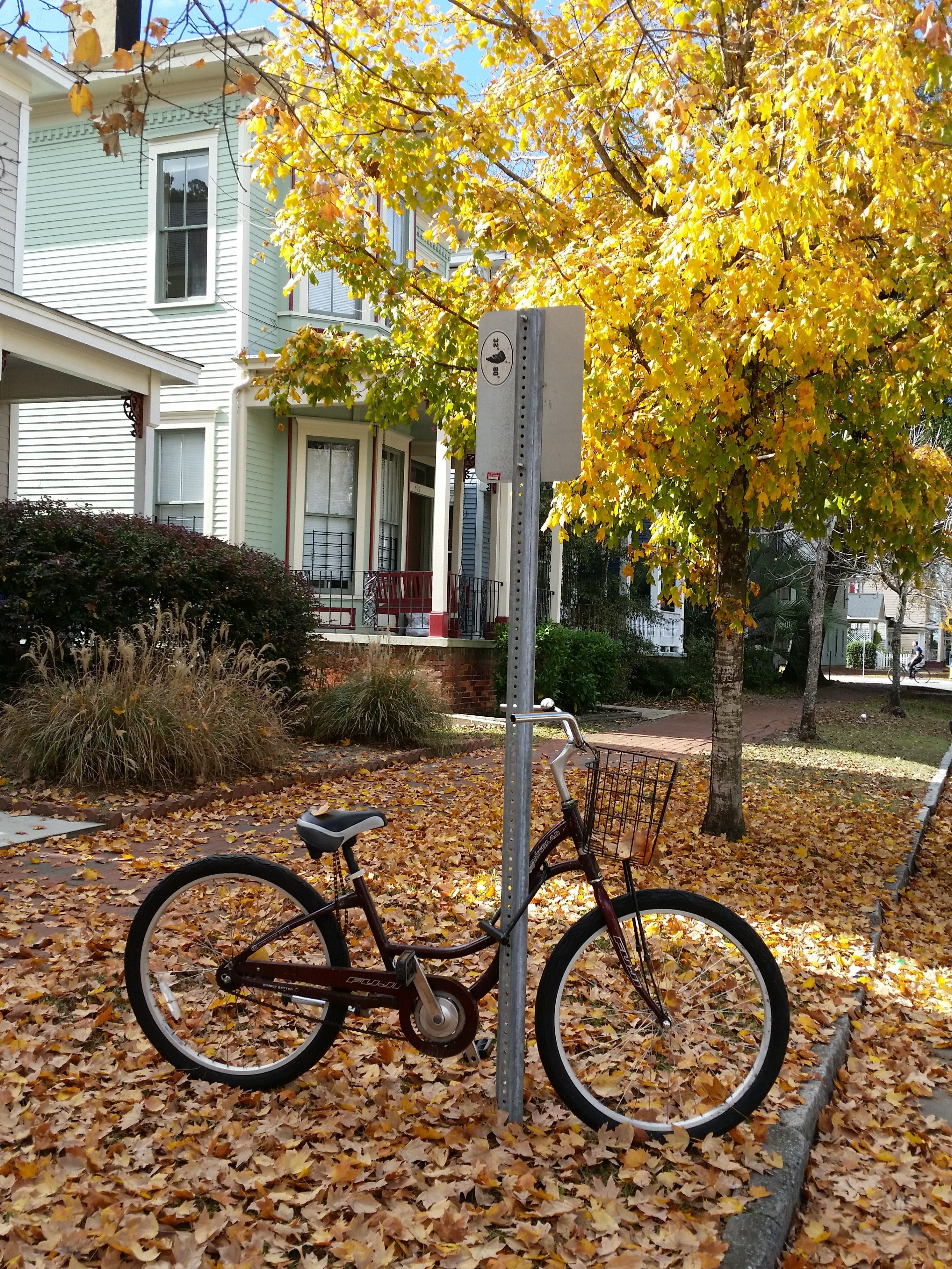 Beautiful late fall day in SAV...perfect weather for exploring by bike