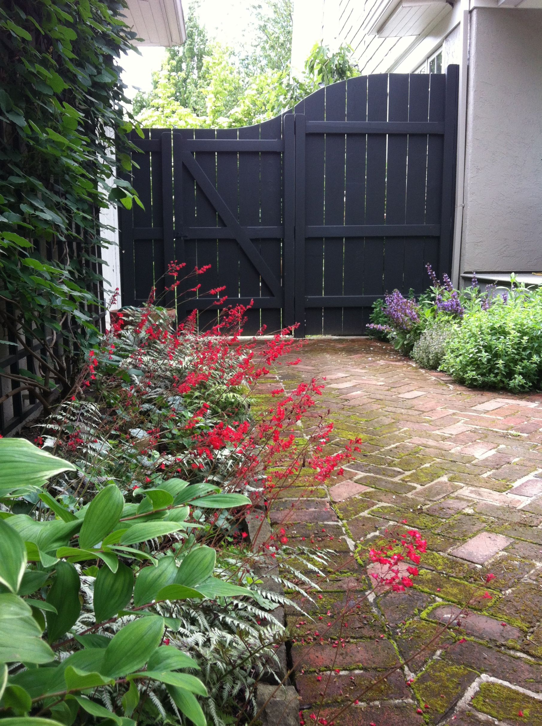 Backyard privacy fence and gate | Privacy landscaping ...
