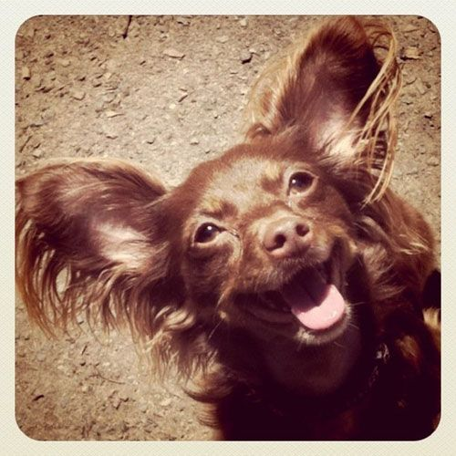 Everyone Loves Coco With Images Veterinary Hospital Pet Care