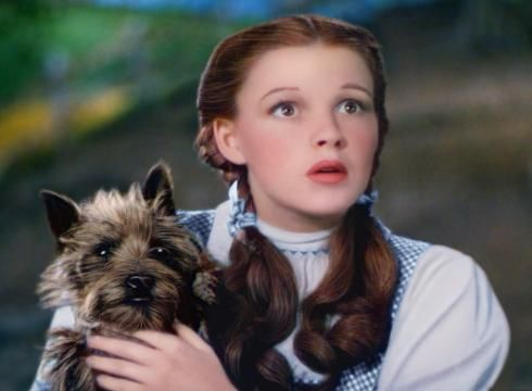 Bid To Make Toto Breed Top Dog In Kansas Fails Famous Dogs