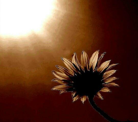 Sunflower & sun