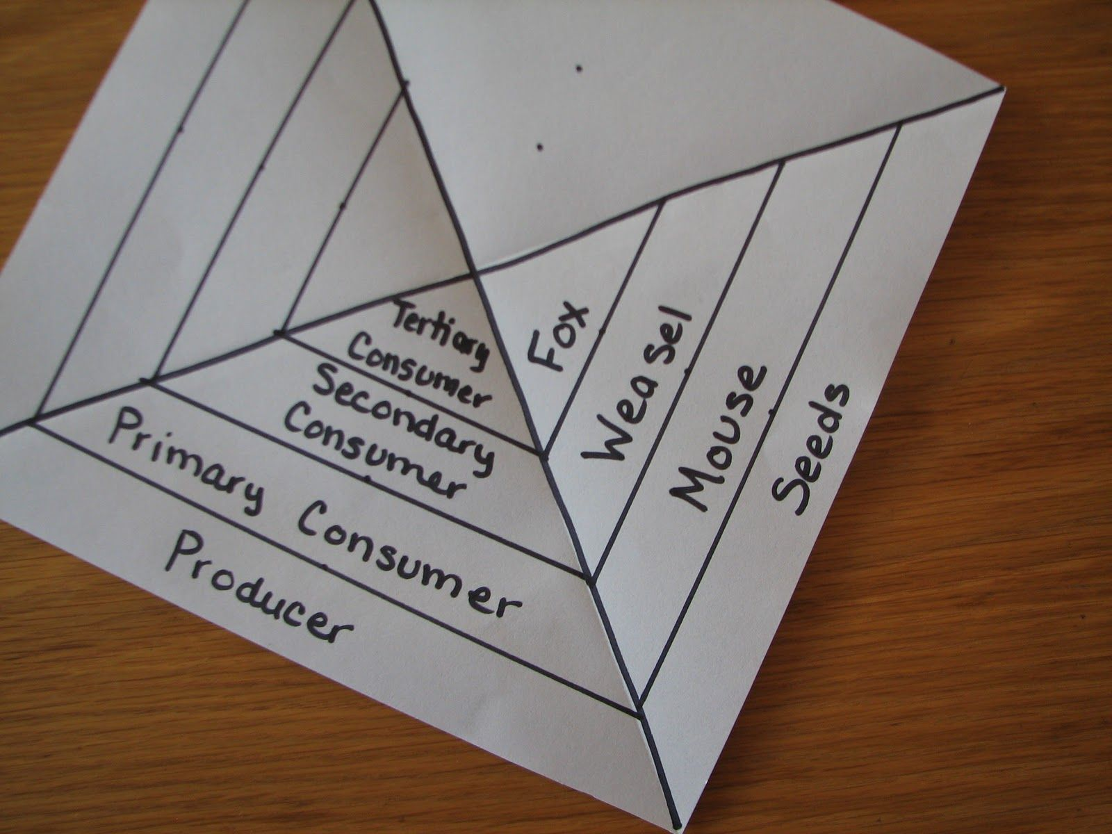 Science Matters Food Chain To Food Pyramid