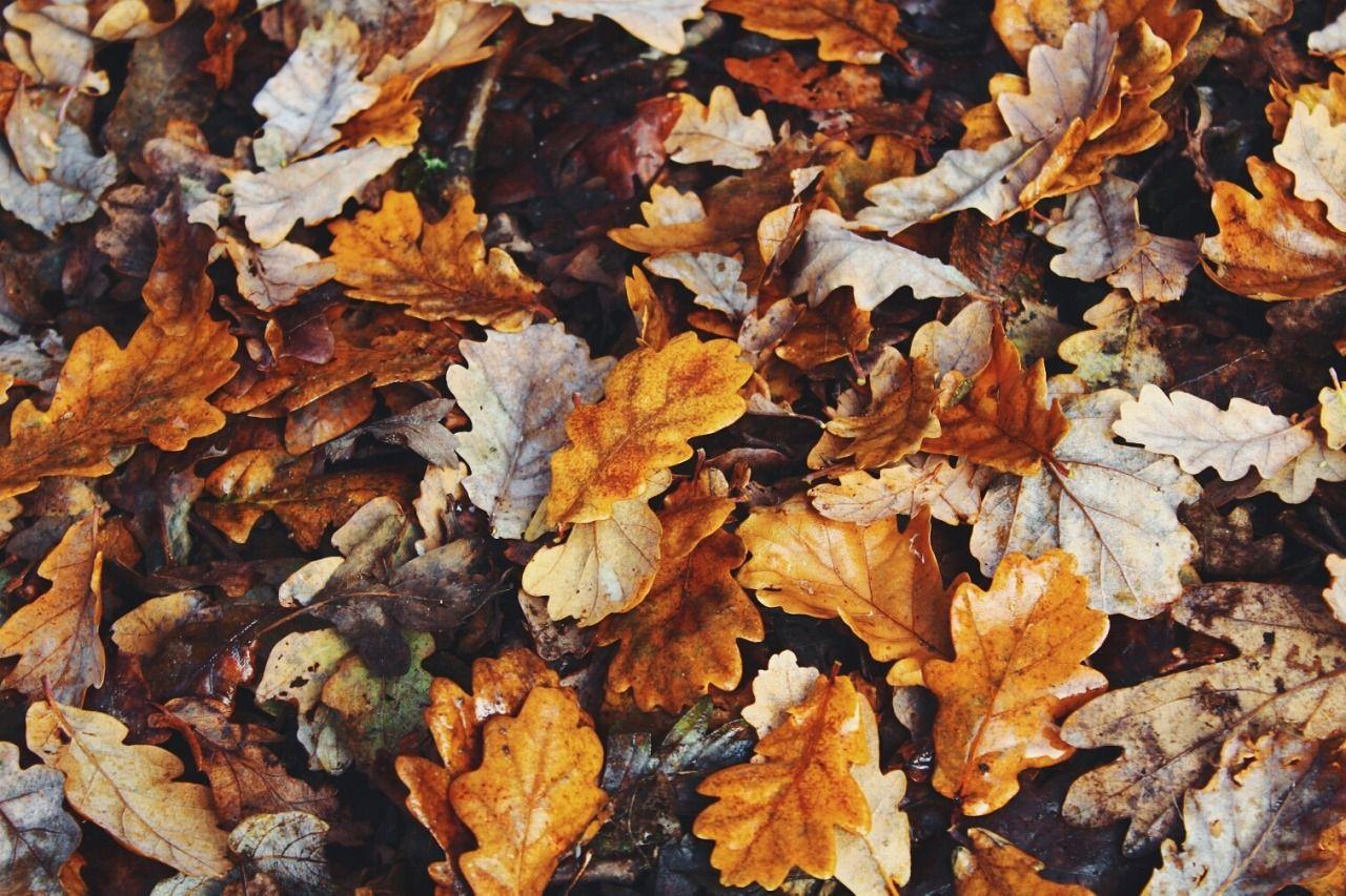 Caitlin Bellis Photography Night In The Wood Autumn Aesthetic Autumn Trees