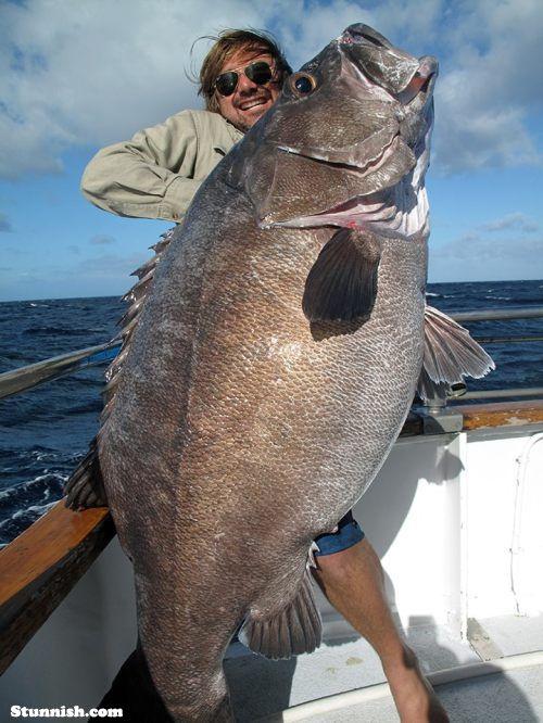 Big Catch Fish Cool Fish Big Fish