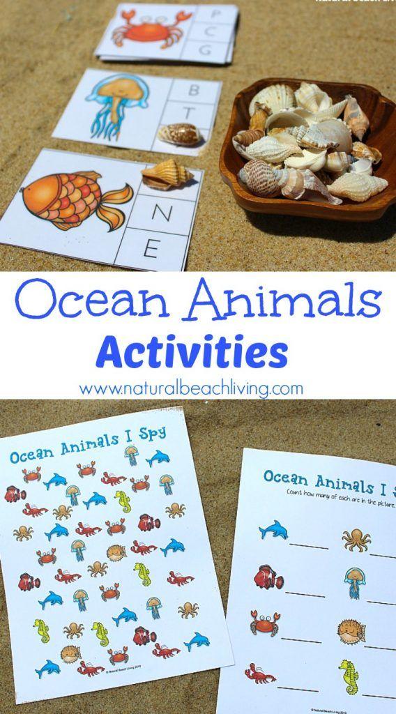 The Best Ocean Animals Preschool Activities Beach theme