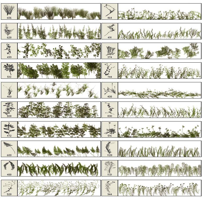43+ Brush vegetation information