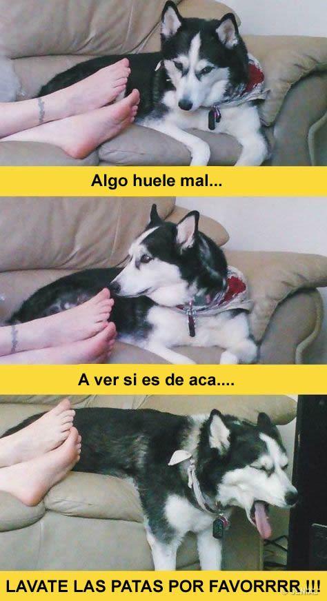 Silviabollada Humor Divertido Sobre Animales Memes De Perros Chistosos Memes Graciosos