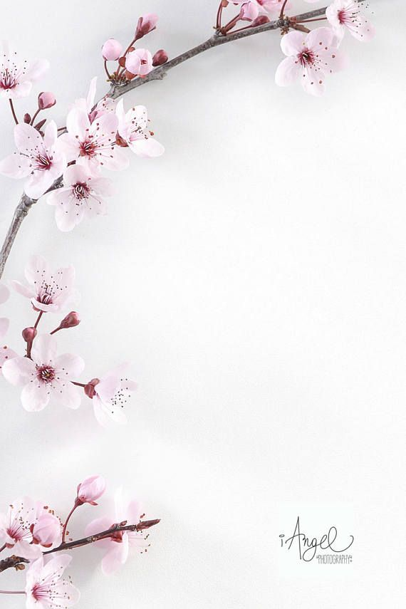 4 Floral Photos Wedding Stock Photography Digital Download Etsy White Background Photography Floral Photo Pastel Background