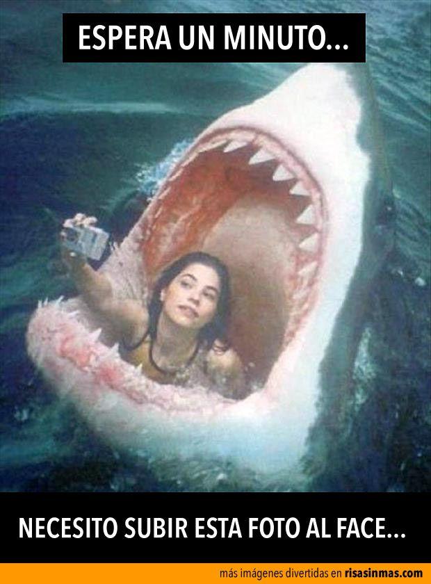 Necesito Subir Esta Foto Al Face Tiburones Divertidos Gracioso Fotos
