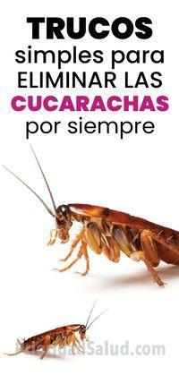 Como Acabar Con La Plaga De Cucarachas Chiquitas Trucos Simples Para Eliminar Las Cucarachas Por Siempre Remedios