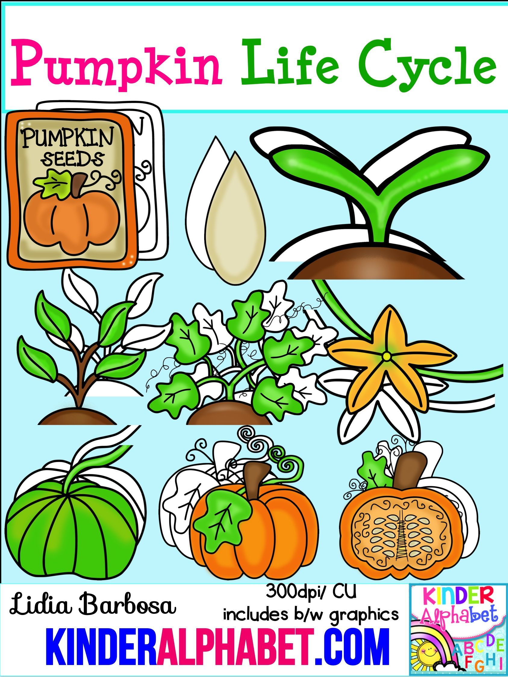 Pumpkin Life Cycle Clip Art For Teachers