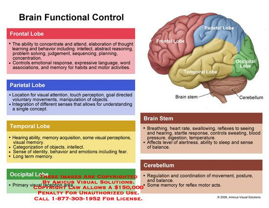 Brain Diagram And Functions | health tips | Pinterest | Brain ...