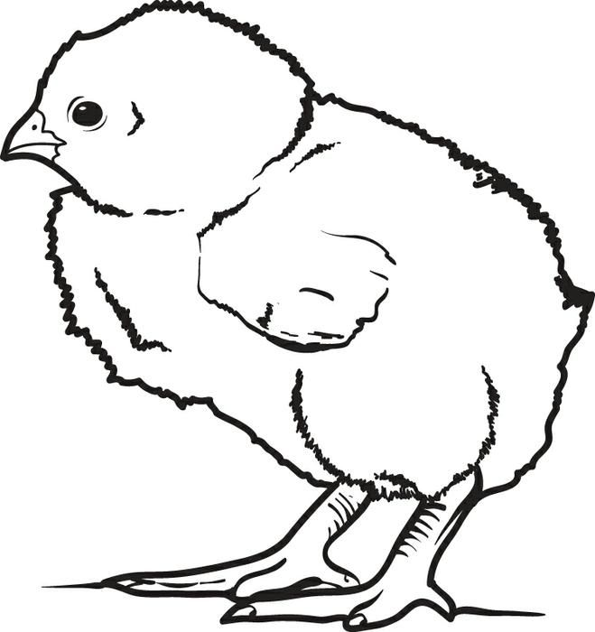 Little Baby Chick Coloring Page