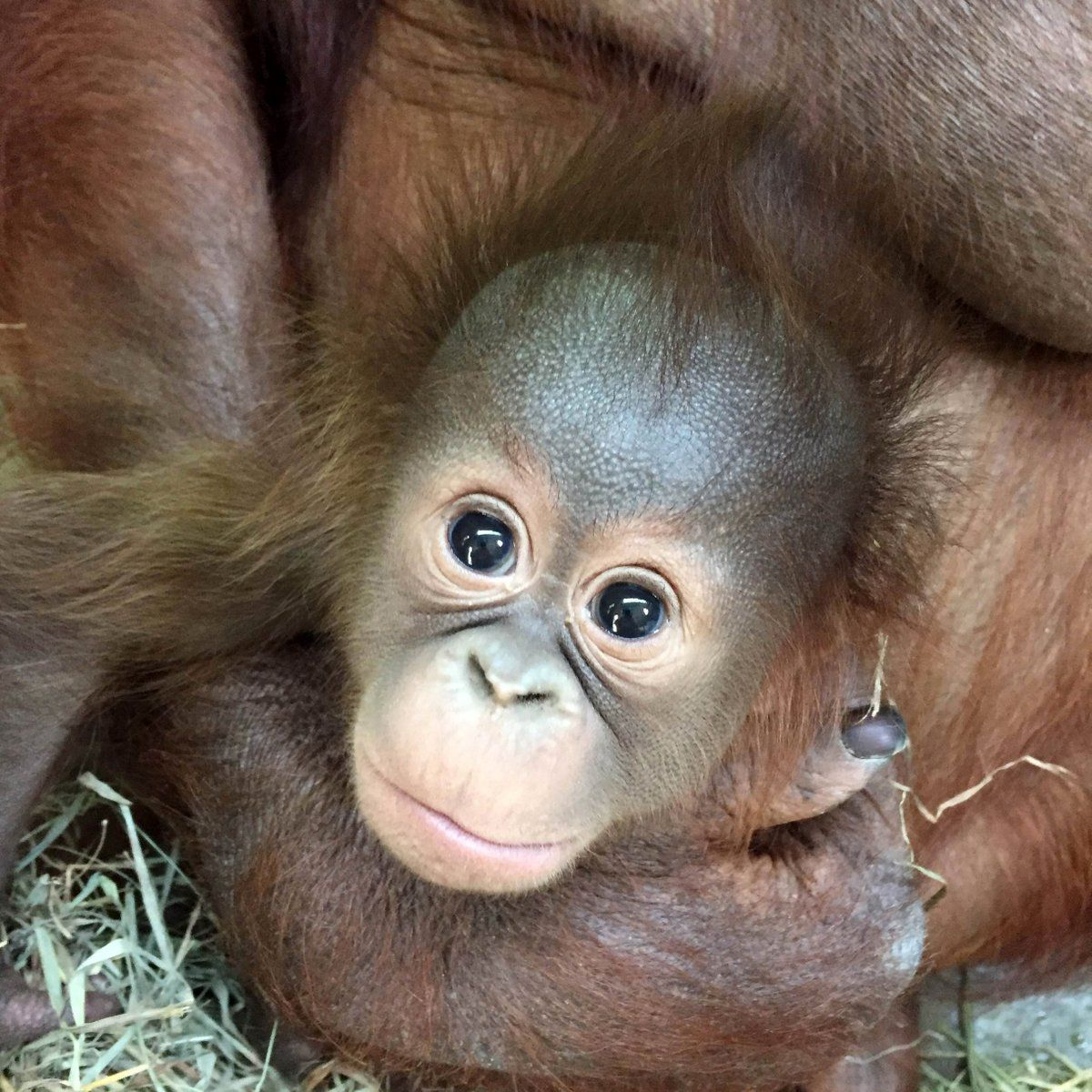 10+ Why are zoos bad for animals ideas