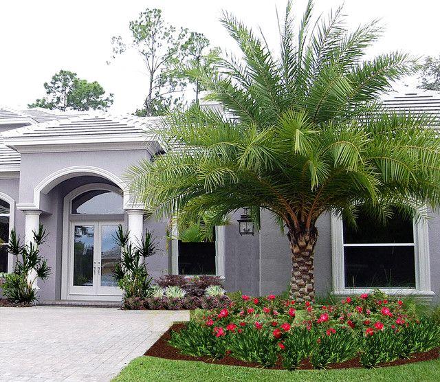 Landscaping palms jardines pinterest jardines for Casas diseno jardines tropicales