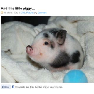 It's so cute, I'm going to die!
