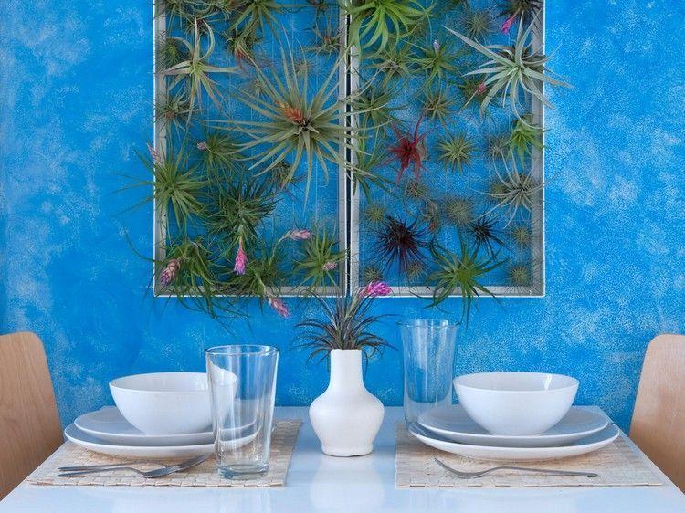 plantes épiphytes et plantes aériennes en déco murale  mur végétal