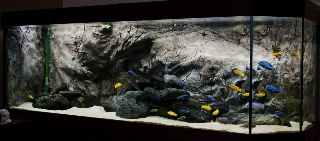 aquascape idea | Lake Malawi: mbuna | Cichlid aquarium ...