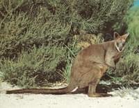 Todas Las Categorias De Animales Animales Del Desierto Equidna Canguros