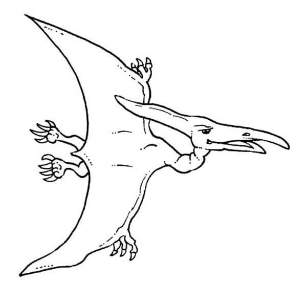 Pteranodon, : How to Draw Pteranodon Coloring Page