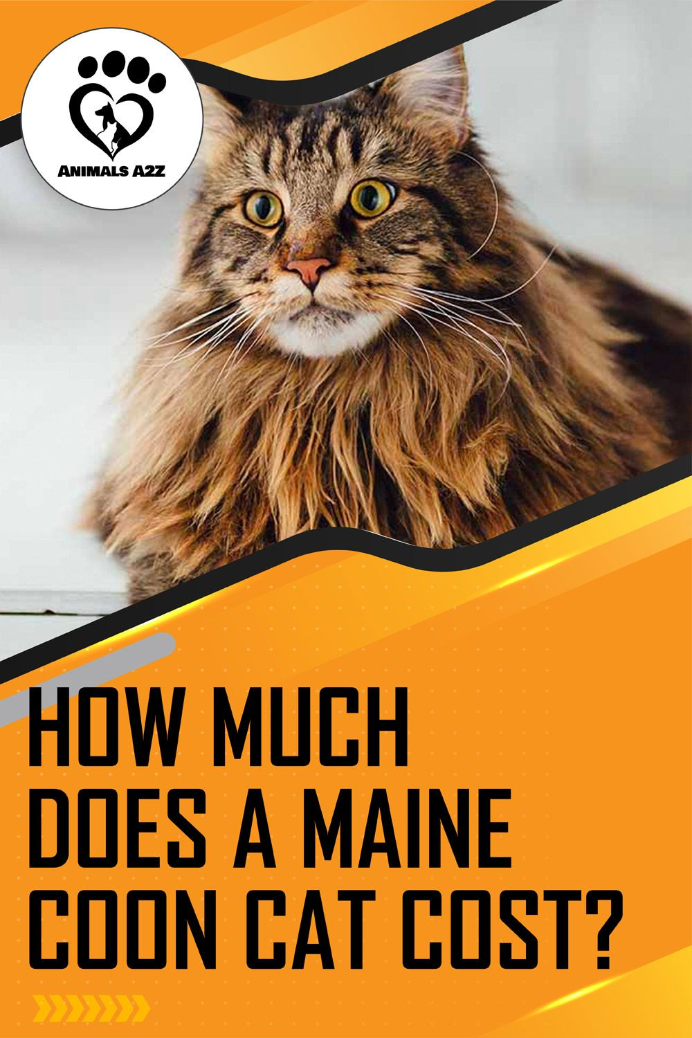A Maine Coon cat costs anywhere around 400 to 1500. It