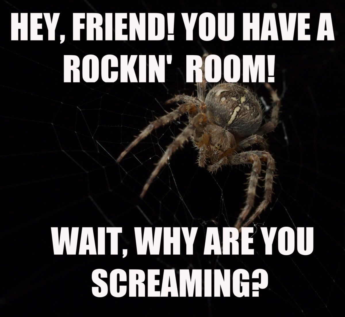 Why Are You Screaming With Images Spiders Scary Spider Meme