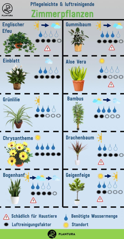 Air Purifying Plants The Top 10 Pflanzen Zimmerpflanzen Pflanzen Zimmer