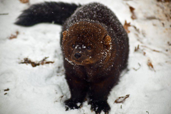 20 Photos Of Wildlife In Maine That Will Drop Your Jaw
