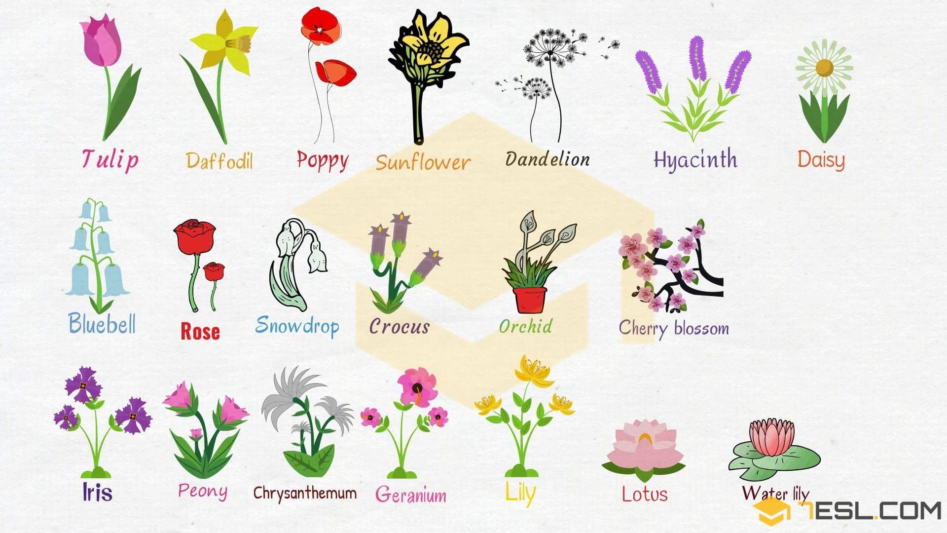 Flowers Names Useful List Of Flowers With Images 7 E S L List Of Flowers Flower Names Flowers Names And Pictures