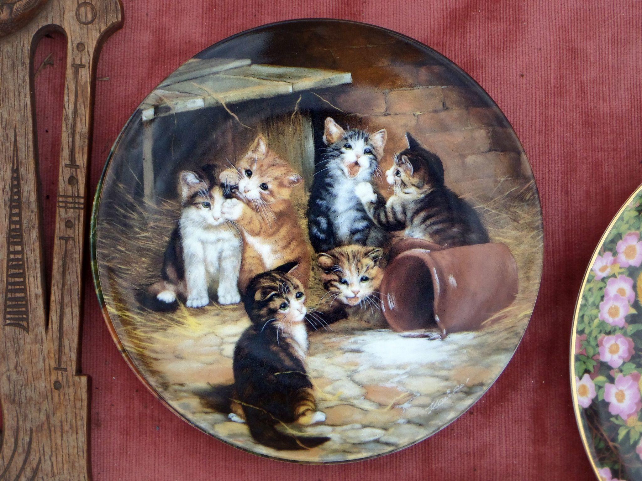 Kittens on the plate by Grzegorz Adamski on 500px
