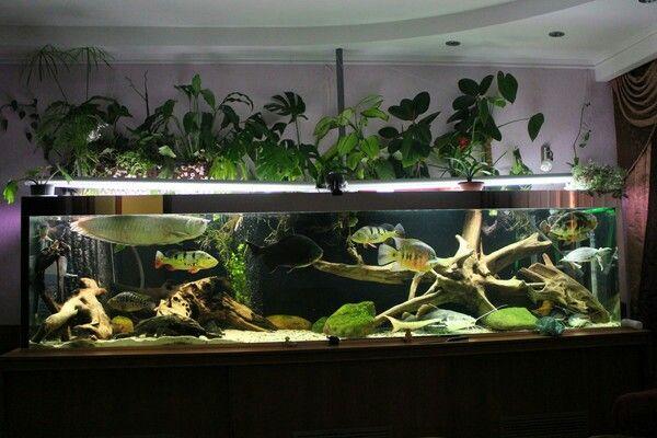 Amazon aquarium freshwater aquariums pinterest for Amazon fish tanks