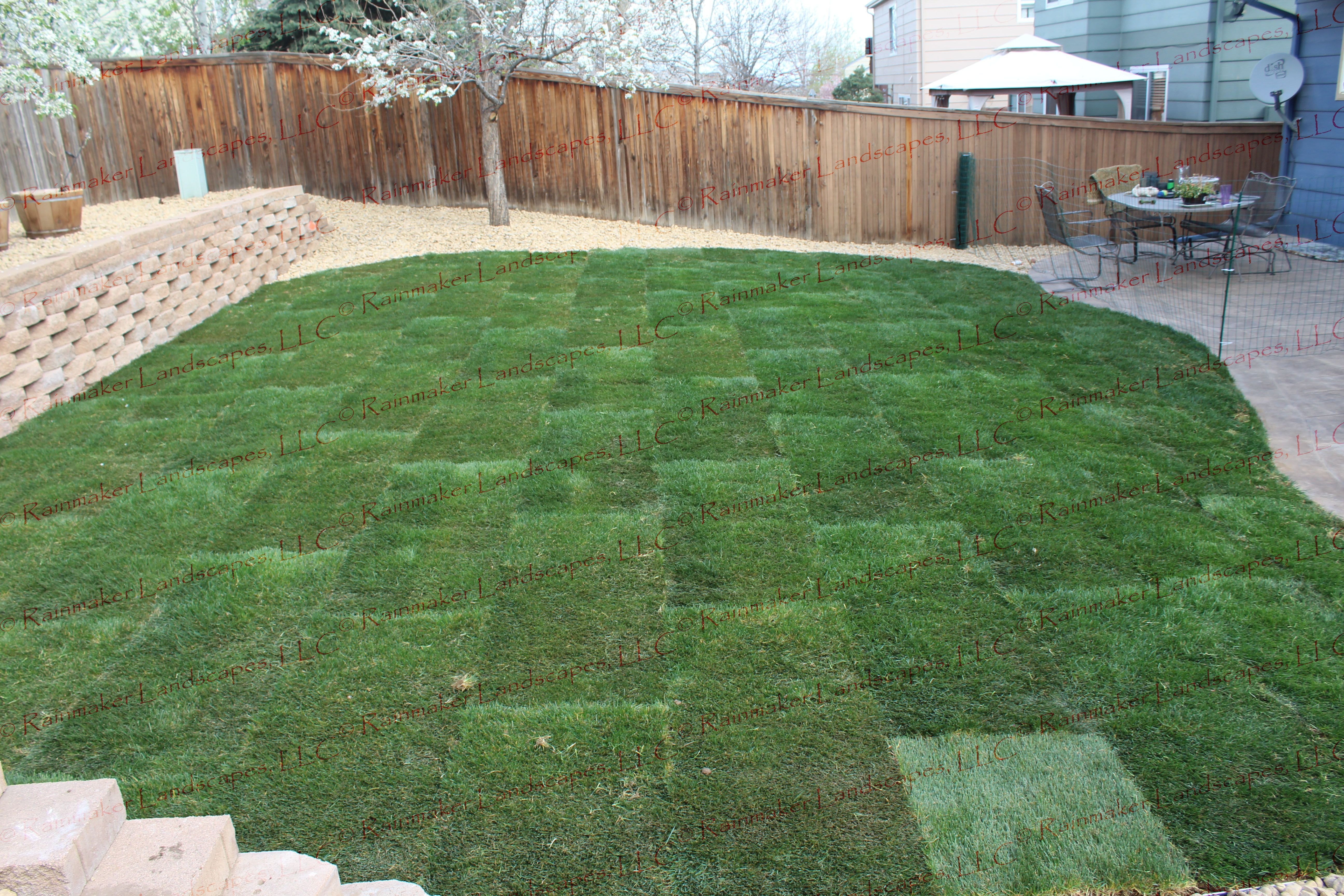 landscaping back yard landscape sod grass dog friendly back