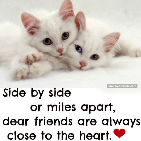 Serious Quotes On Friendship: Dear Friends Are Always Close To My Heart Quotes Quote