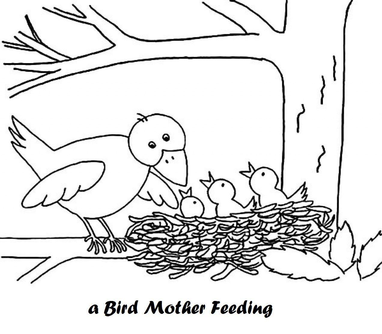 Bird Part Diagram Coloring Pages