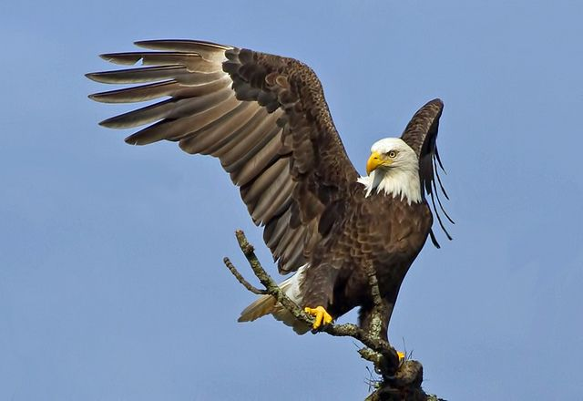 Best Places For Birding In Florida S Pasco County Bird Bald Eagle Bird Watching