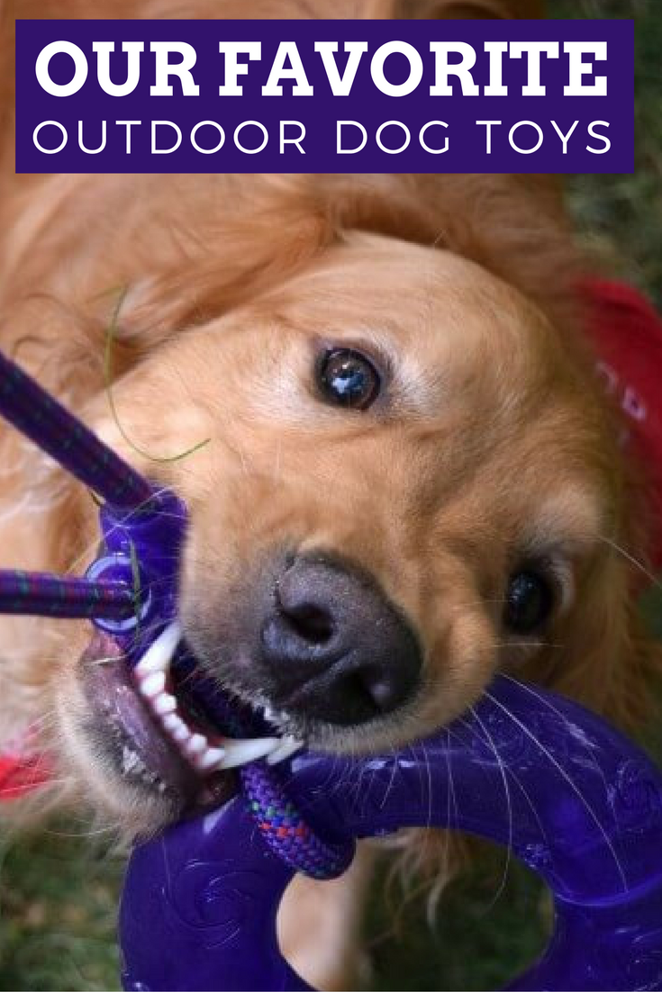 Breaking Down The Best Dog Toys For Outdoor Play. Whether Your Dog Likes To  Fetch