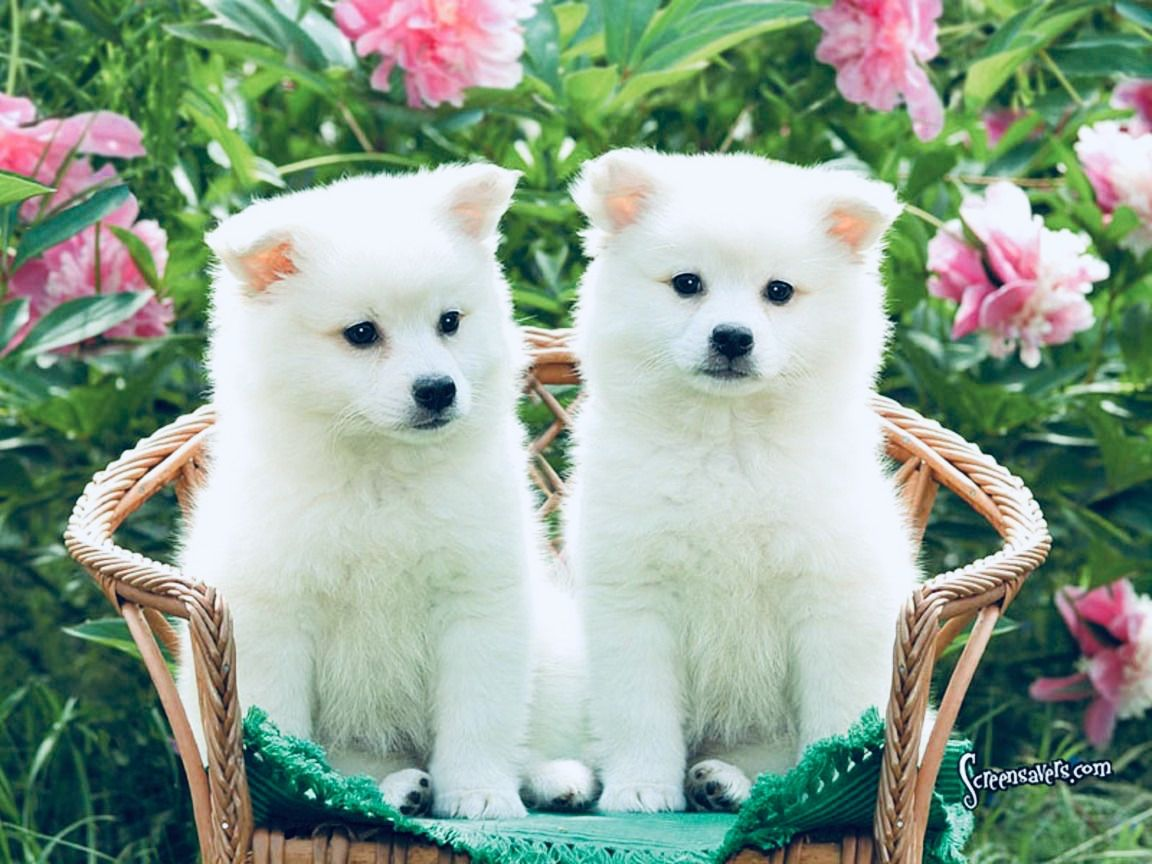 Animals Cute Puppies Puppy Dog Pictures Cute Puppy Wallpaper Wallpaper cute pet dog sunset house