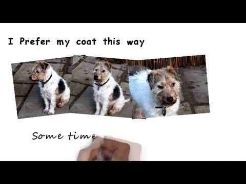 Dog Grooming 101 Dog Insurance Dog Grooming Dogs Id Tags Dog Food