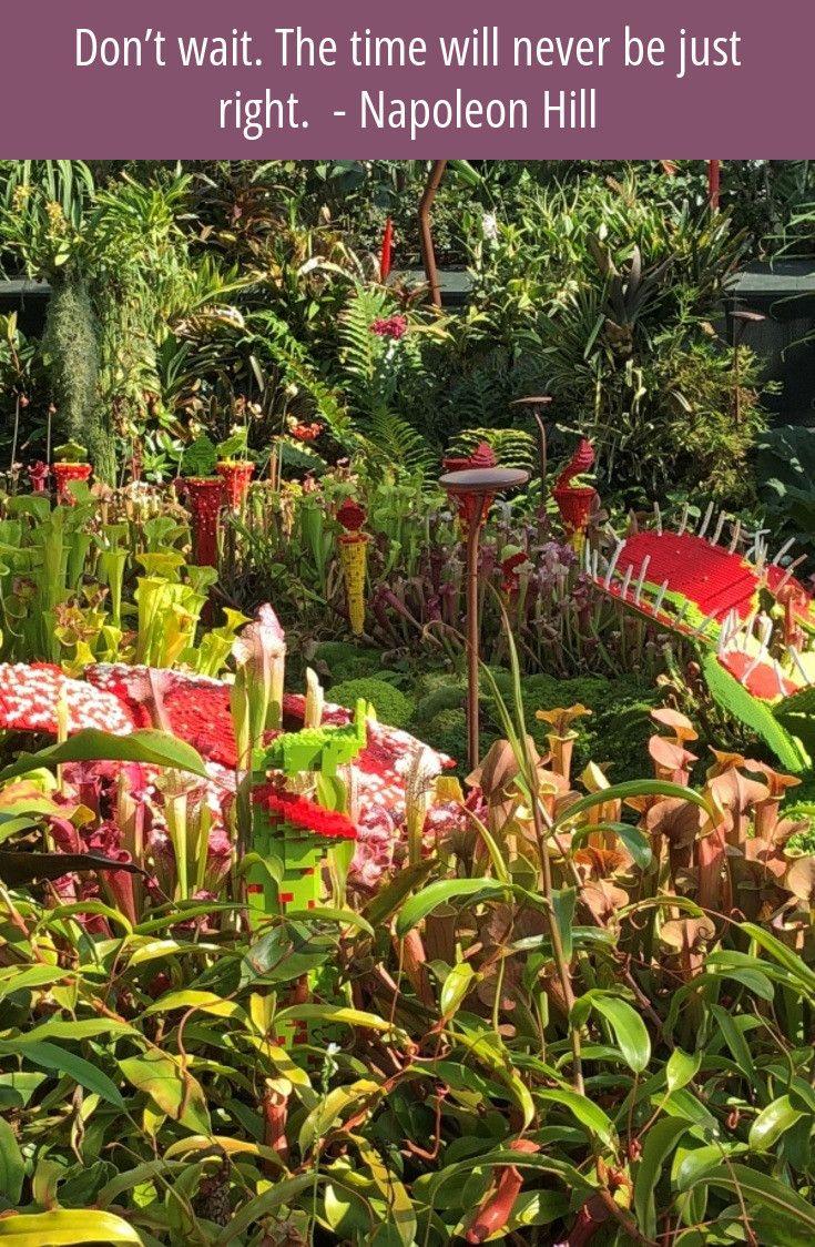 Follow the link to read more...#gardenideas #gardening ...