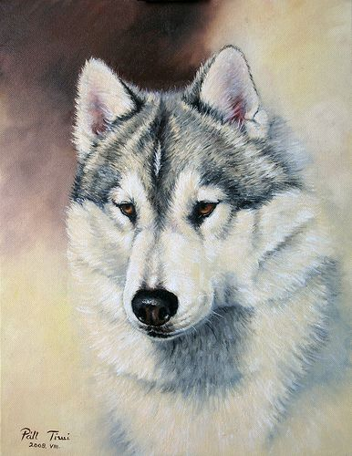 Siberian Husky Painting In 2020 Dog Art Dog Artwork Husky Drawing