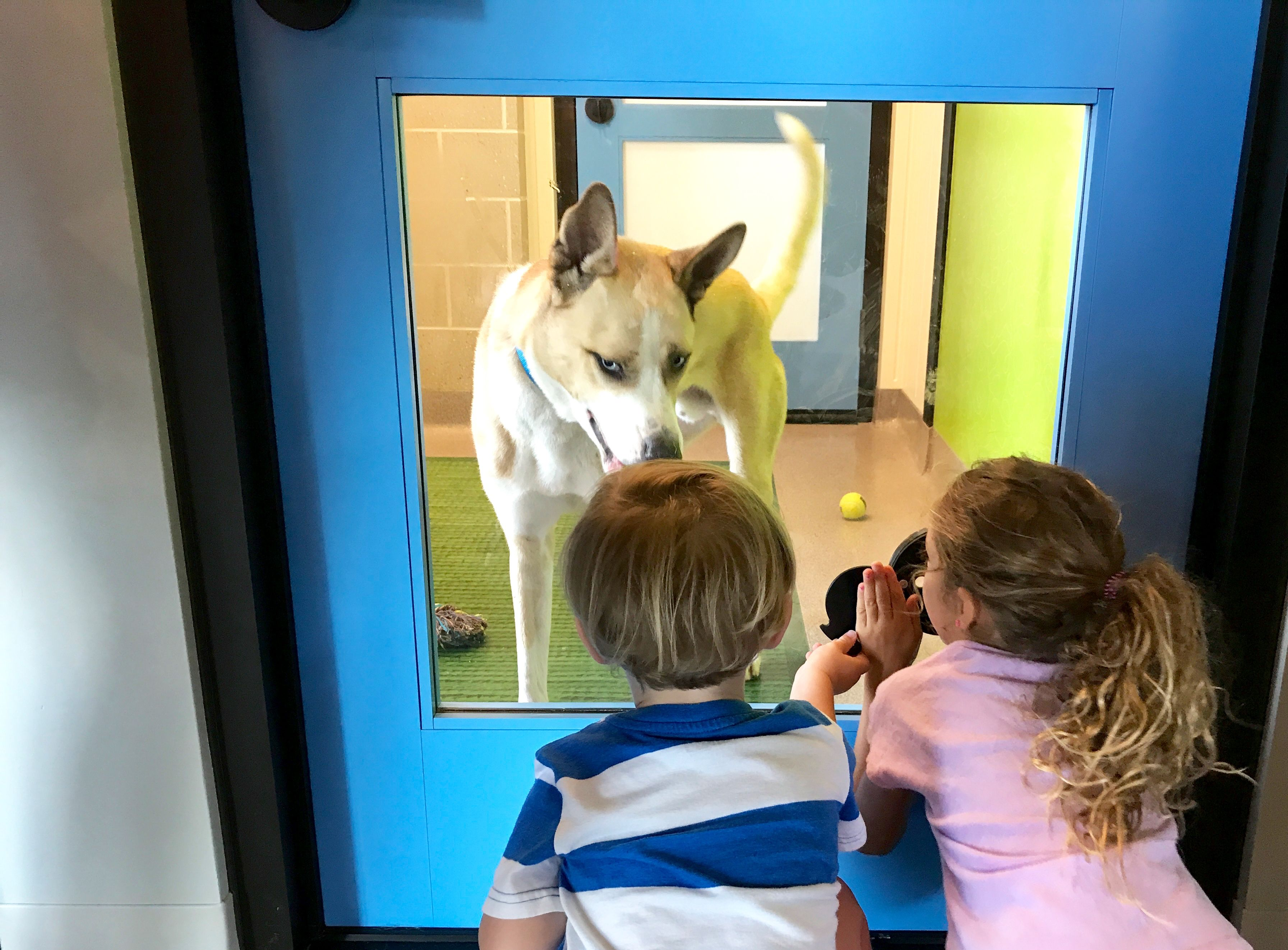 PetSpace Is Now Open and It's Doggone Amazing #petadoption