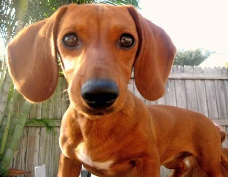 Tabitha Olivia S Sister There S Just Something About Doxies